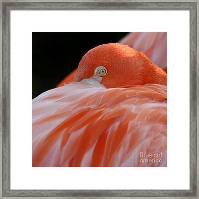 Framed Print featuring the photograph Flamingo At Rest. by Bob and Jan Shriner