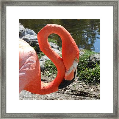 Flamingo By The Pond Framed Print by Kay Gilley