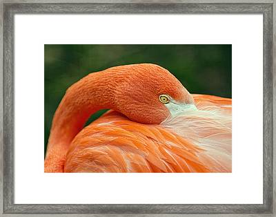 Framed Print featuring the photograph Flamingo Closeup by RC Pics