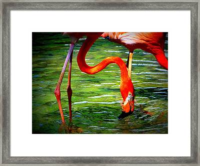 Flamingo Framed Print by David Mckinney