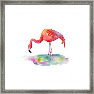 Flamingo Dip Framed Print