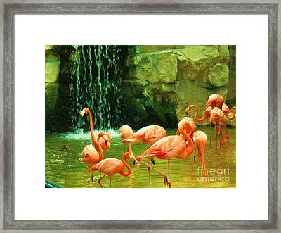 Flamingo Framed Print by Esther Rowden