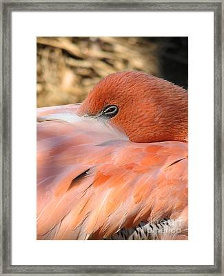 Framed Print featuring the photograph Flamingo by Eva Kaufman