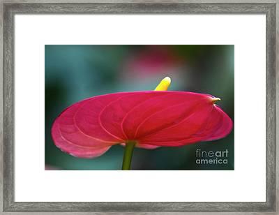 Flamingo Flower 1 Framed Print by Heiko Koehrer-Wagner