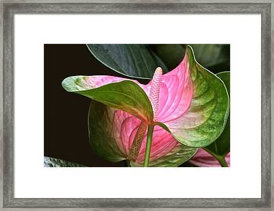 Flamingo Flower Framed Print
