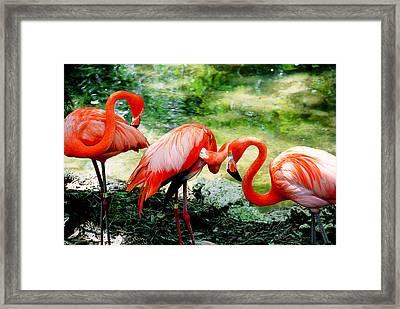 Flamingo Friends Framed Print