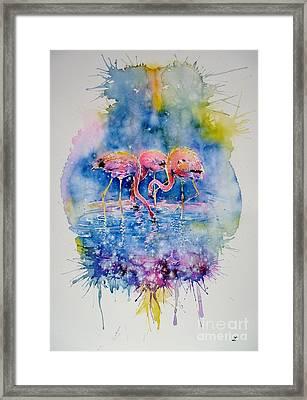 Flamingo Glare Framed Print by Zaira Dzhaubaeva