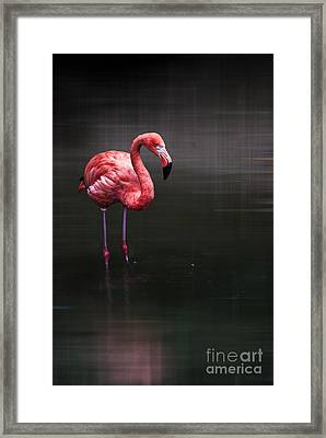 Flamingo  Framed Print by Hannes Cmarits