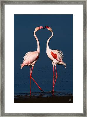 Flamingo Heart Framed Print by Jeppsson Photography