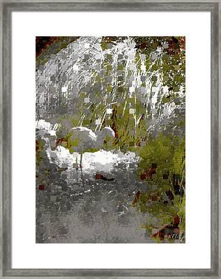 Flamingo Framed Print by Kelly McManus