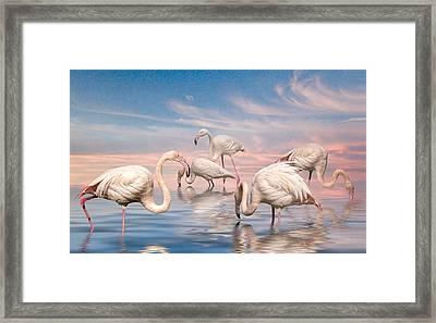 Flamingo Lagoon Framed Print