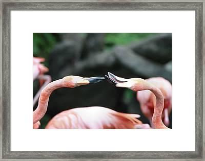 Flamingo Moment Framed Print