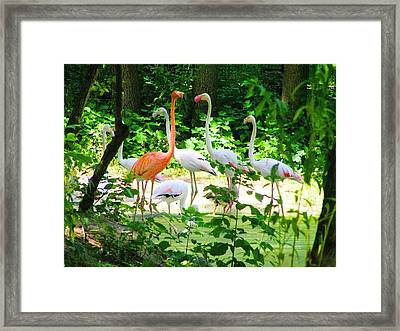 Flamingo Framed Print by Oleg Zavarzin