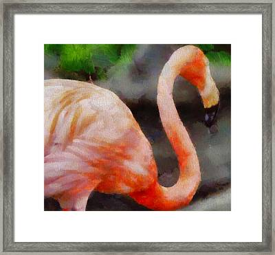Flamingo Painting Framed Print by Dan Sproul