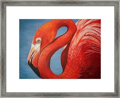 Flamingo Framed Print by Pam Kaur