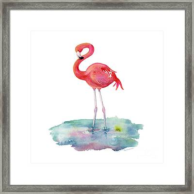 Flamingo Pose Framed Print by Amy Kirkpatrick