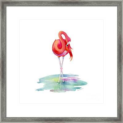 Flamingo Primp Framed Print