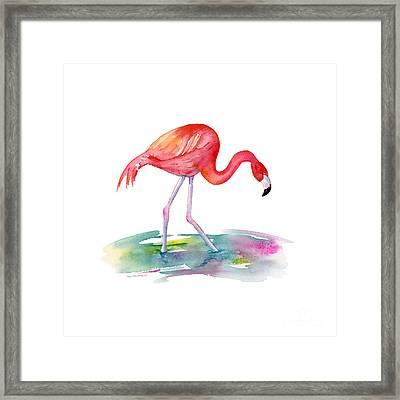 Flamingo Step Framed Print