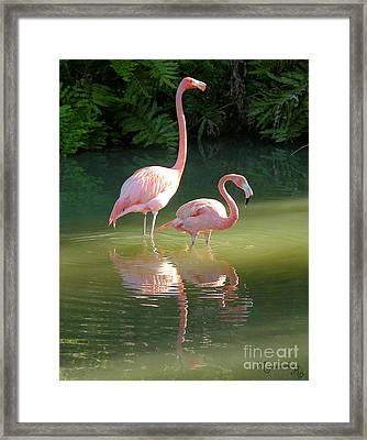 Flamingo Stroll Framed Print