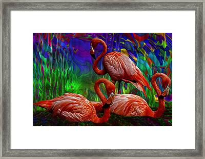 Flamingo Trio II Framed Print
