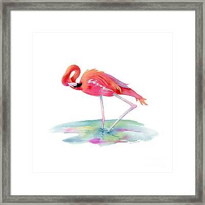 Flamingo View Framed Print