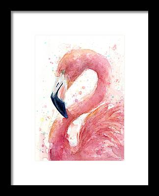 Flamingos Framed Prints