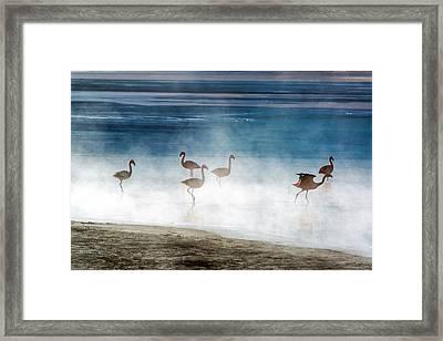 Flamingoes In Bolivia Framed Print