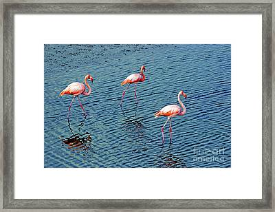 Flamingoes In The Galapagos Painting Framed Print by Al Bourassa