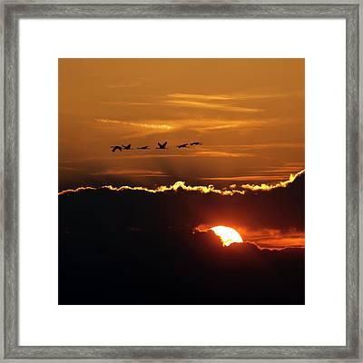 Flamingos At Sunset Framed Print