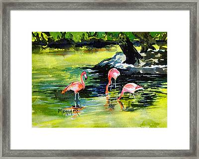 Flamingos At The St Louis Zoo Framed Print by Spencer Meagher