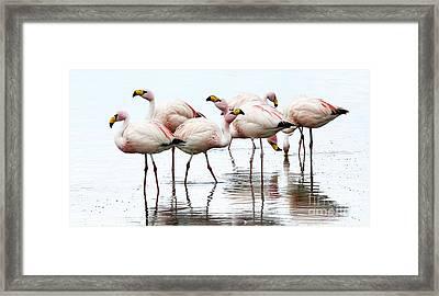 Flamingos Bolivia 1 Framed Print by Bob Christopher