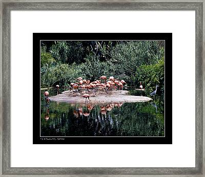 Framed Print featuring the photograph Flamingos Colony by Pedro L Gili