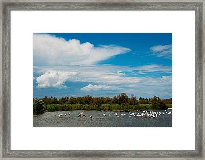 Flamingos In A Lake, Parc Framed Print