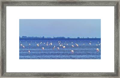 Flamingos In The Pond Framed Print