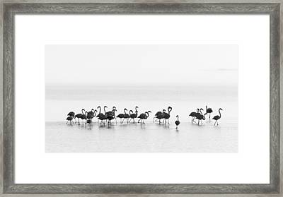 Flamingos Framed Print by Joan Gil Raga