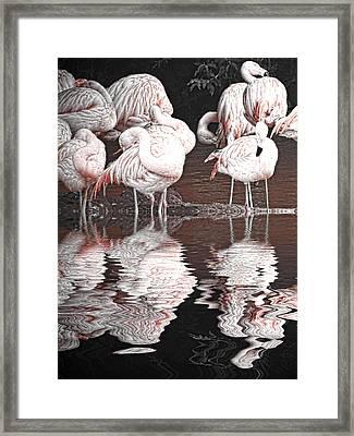 Flamingos Framed Print by Sharon Lisa Clarke