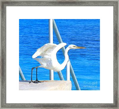 Flaps Up Framed Print by Patti Whitten