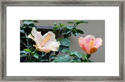 Flare 24 Framed Print
