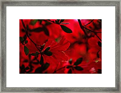 Framed Print featuring the photograph Flash Mob by John Harding