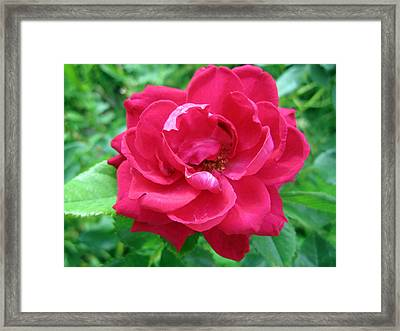 Flashy Framed Print by Mike Podhorzer