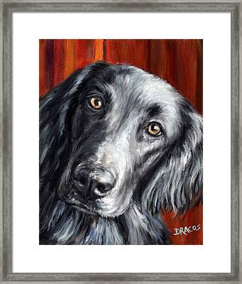 Flat-coated Retriever Portrait On Red Framed Print