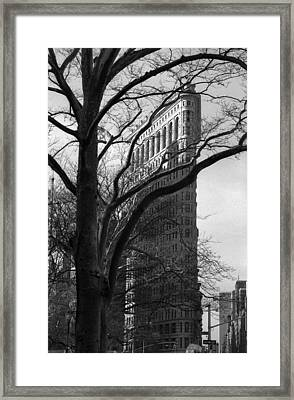 Framed Print featuring the photograph New York Photography - Flatiron With Tree by Dave Beckerman