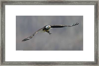 Flat Out  Framed Print by Glenn Lawrence