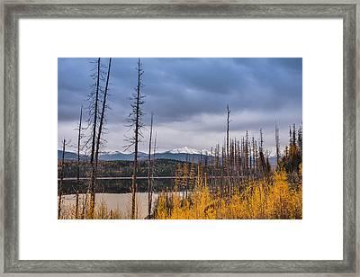 Flathead National Forest Framed Print
