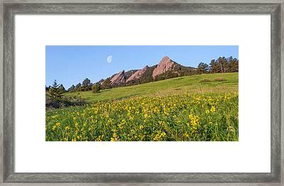 Flatiron Flowers Framed Print