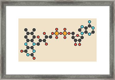 Flavin Adenine Dinucleotide Molecule Framed Print by Molekuul