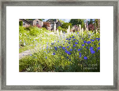 Flax Flowers In Summer Garden Framed Print by Elena Elisseeva