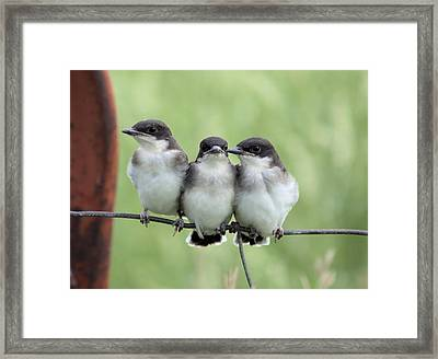 Fledged Siblings Framed Print
