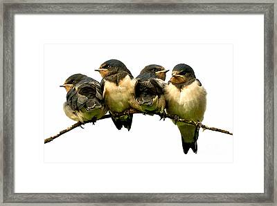 Fledglings Framed Print by Liz  Alderdice