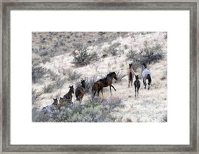 Fleeing Up The Draw Framed Print